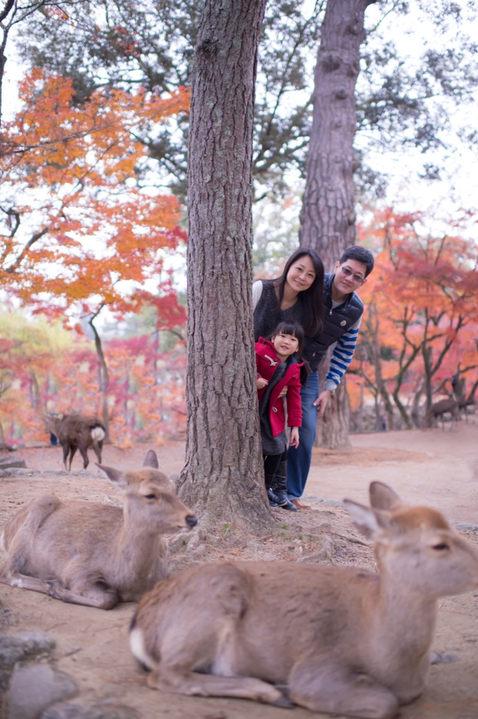 奈良公園 秋季楓葉銀杏 2017-11-30-11-26-22-VA4_6520