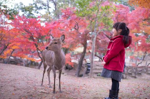 奈良公園 秋季楓葉銀杏 2017-11-30-11-45-36-VA4_6693