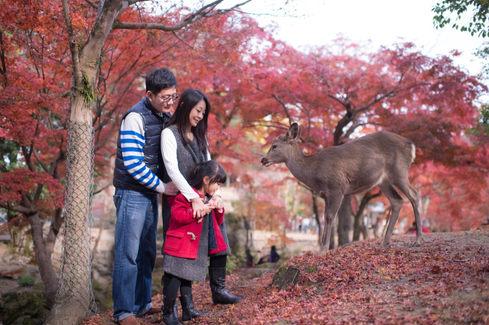 奈良公園 秋季楓葉銀杏 2017-11-30-11-31-16-VA4_6579