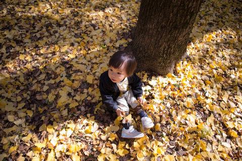 大阪城公園 楓葉銀杏 2017-12-03-10-28-03-VA4_9944.