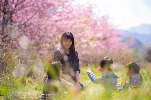 台中武陵農場櫻花2019-03-01-10-57-27-VA4_1775.JPG
