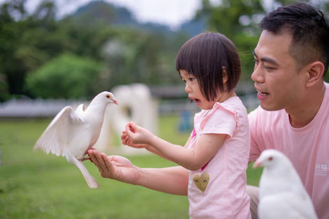 富田花海農場 動物落羽松 2019-05-11-11-39-16-VA4_888