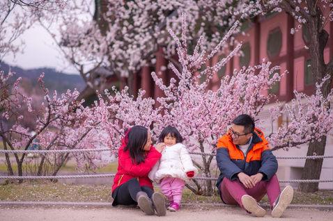 韓國首爾櫻花 2019-04-09-10-01-26-VA4_0355.JPG