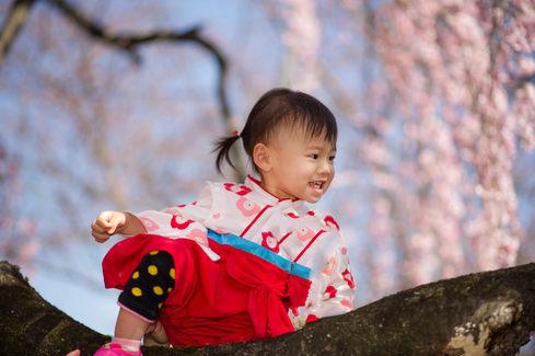 奈良公園櫻花 鹿 2017-04-03-12-49-47-DSC_8208.JP