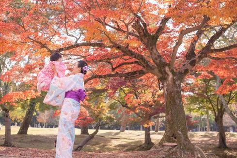 奈良公園楓葉銀杏秋季 2018-11-20-12-34-35-DSC_1906.