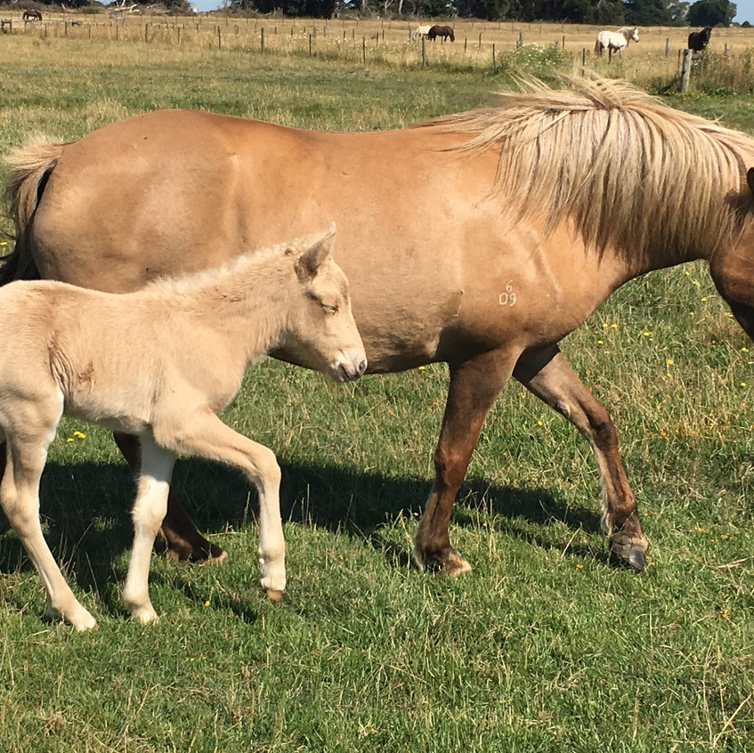 Osk and filly born 3.1.2017