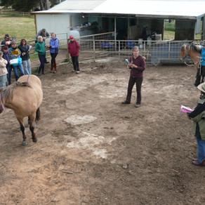 CLINIC - Haldane Icelandic Horses with Herdis Reynisdottir