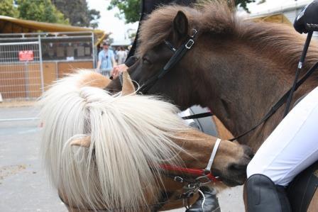 scratchinghorses