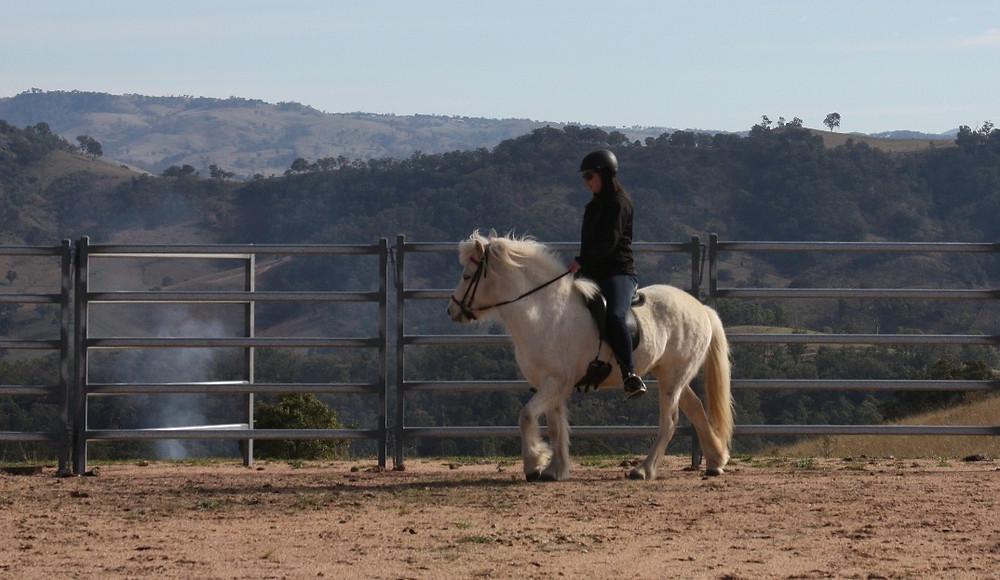 Birta from Haldane ridden by Amy