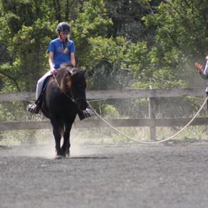 IHAA icelandic horse clinic at Glenormiston