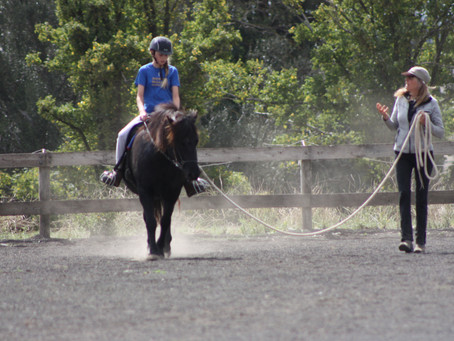 IHAA icelandic horse clinic at Glenormiston