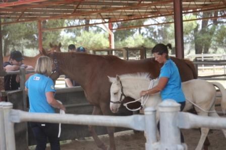 EQUUS foal handling demo