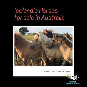 Do we have any horses for sale?