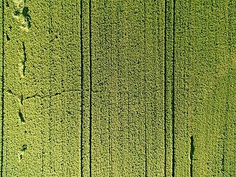 FieldImage2.jpg