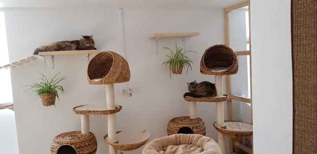 Katzenhotel.jpg