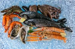 2017Food___Seafood_Seafood_shrimp__fish__mussels_lie_on_ice_116236_