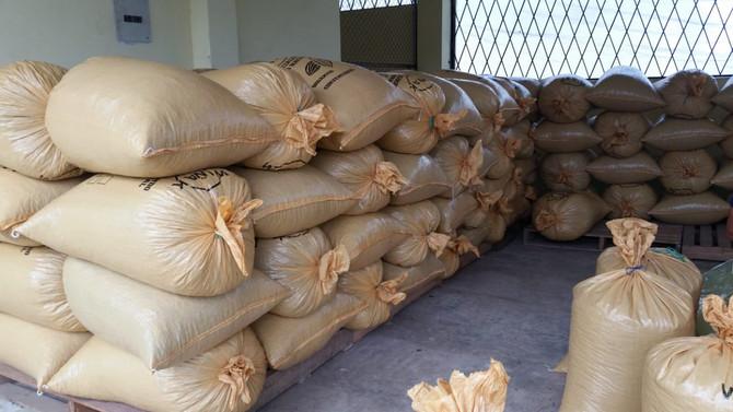 Comercialización de Cacao Fase 7