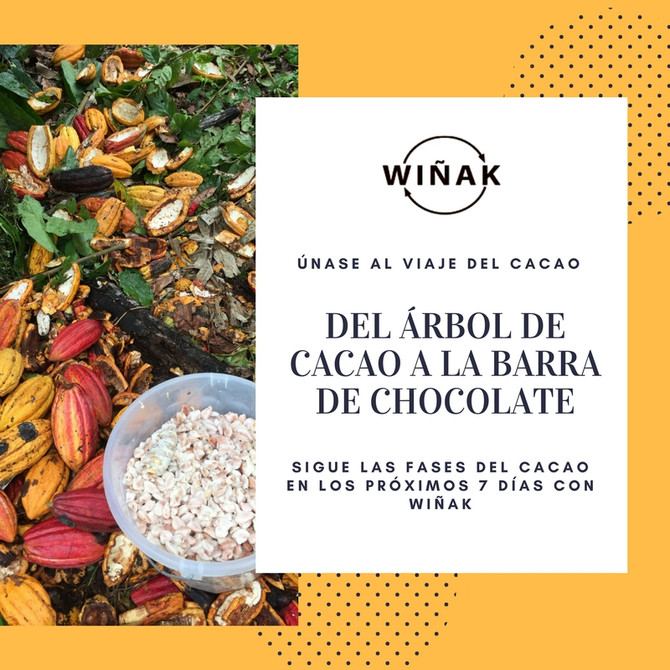 Únase al Viaje del Cacao