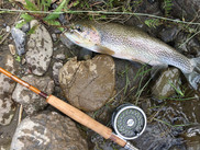 Beautiful fish, nice rod!