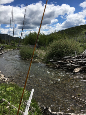 Mountain stream, Alberta
