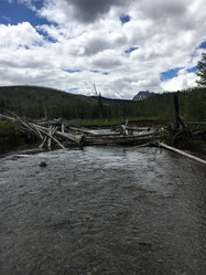 Mountain stream in Alberta
