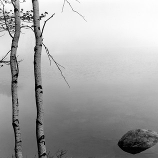 Two Birch, Quabbin Reservoir