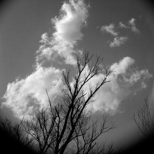 Sky Silhouette #1