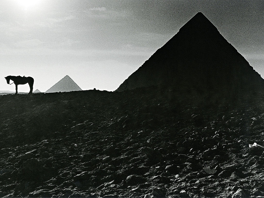 Horse at pyramids of Giza by Walter Rothwell