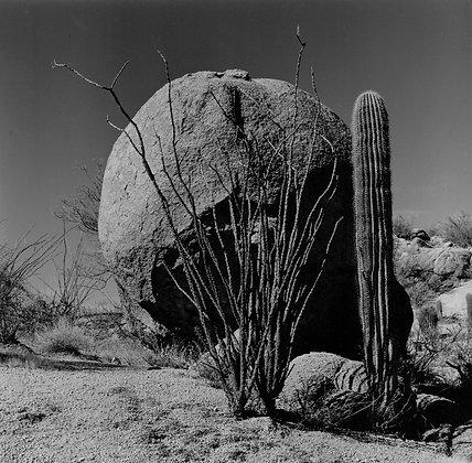 Ocotillo and Saguaro