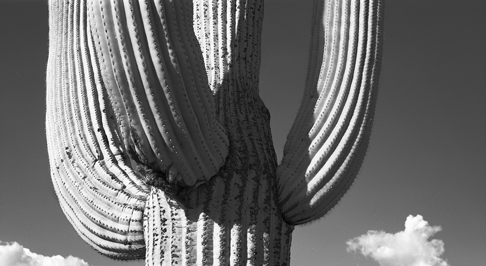 Saguaro and clouds, IG