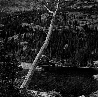 Mills Lake - Dead Tree