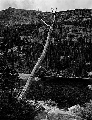 Mills Lake, Dead Tree