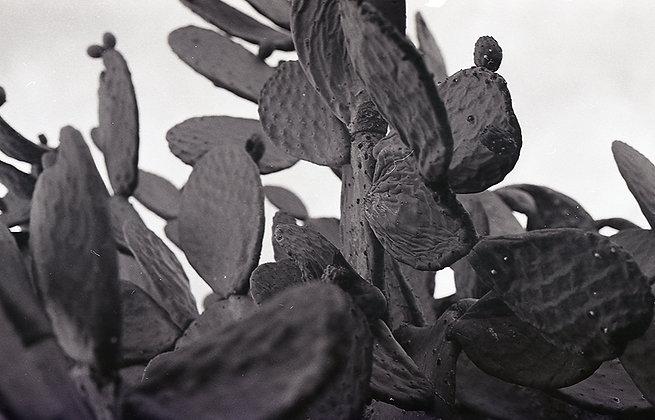 Cactus Wrinkle