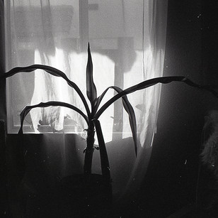 Sunlit windowpane growth