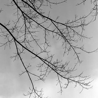 Sky Silhouette #2