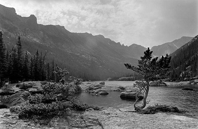 Mills Lake Pine