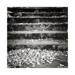 Mossy Steps, 2015