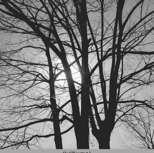 Sky Silhouette #3