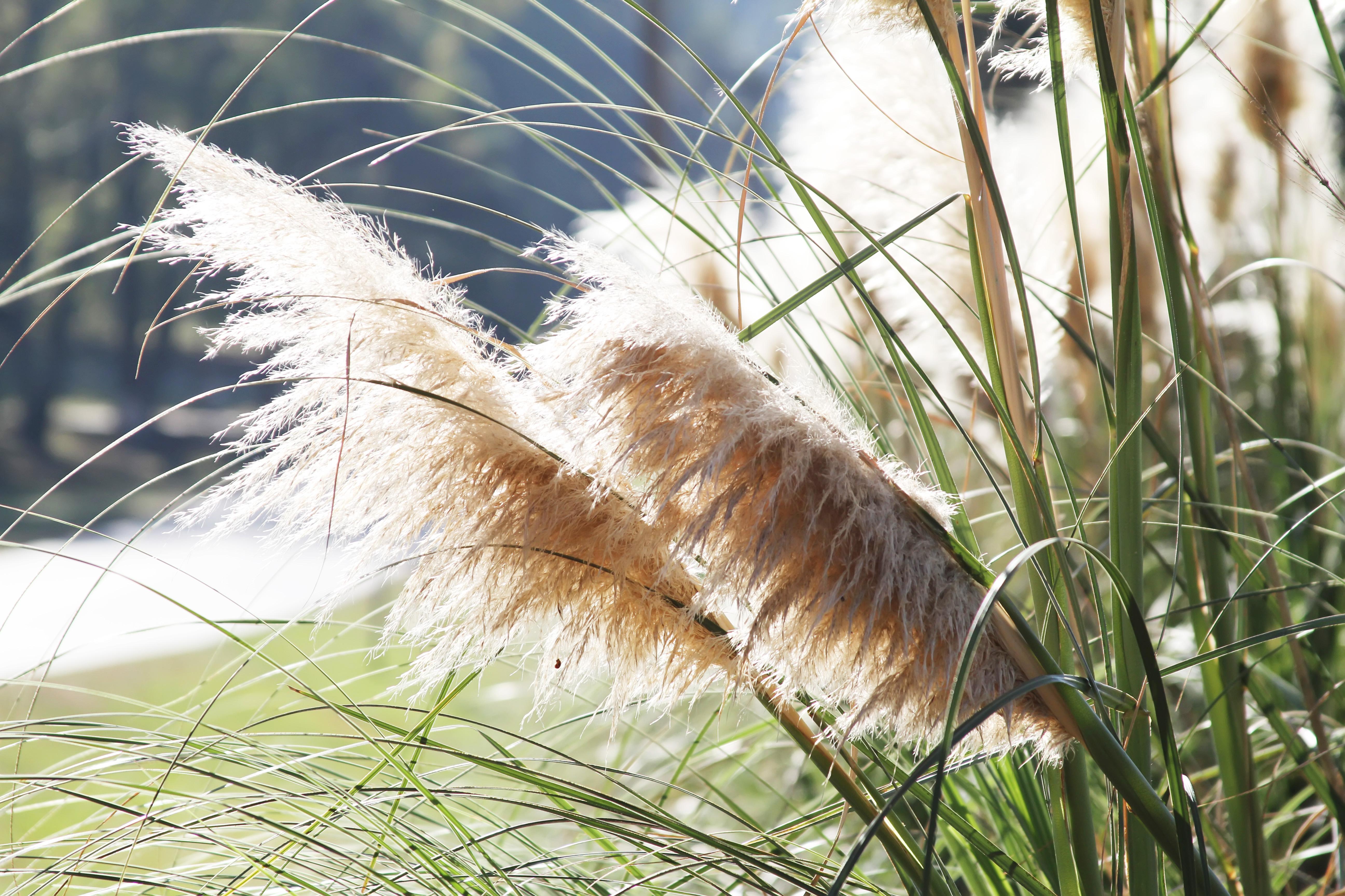 Monticello wheat fields