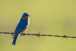 bird watching in monticello, AR