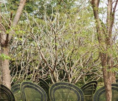 森に生息する椅子