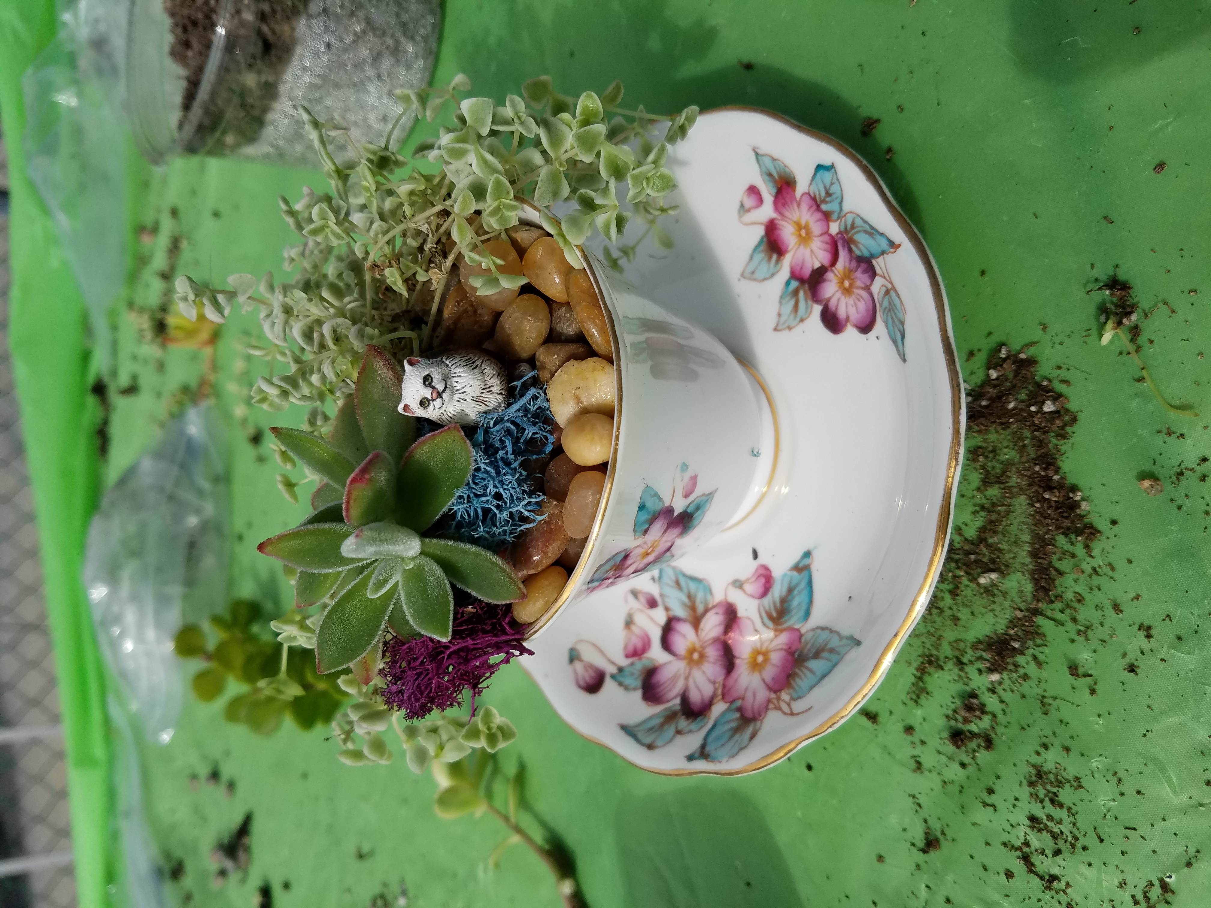 Miniature Tea cup garden