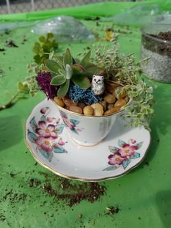 Miniature Tea cup garden