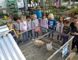 Pre-Schoolers visiting the Chickens