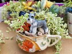 Miniature teacup garden