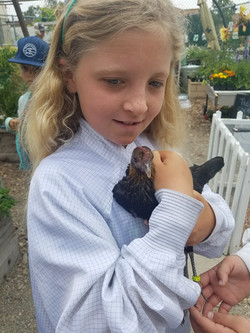 A scholar with our newest hen