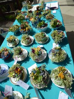 Miniature Tea cup Gardens