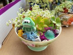 Miniature garden with frog