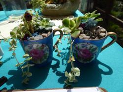 Super tiny teacup gardens