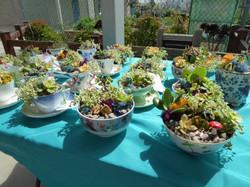 Miniature teacup gardens
